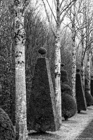 Alternance de troncs d'arbres et de conifères