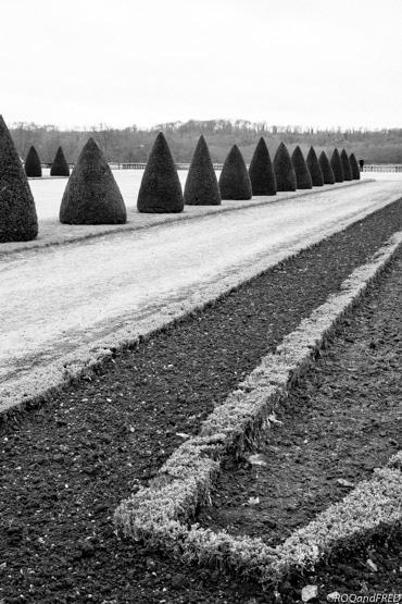 un bel alignement de conifères devant une des ailes du château de Versailles