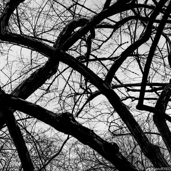 arbres-branches-002