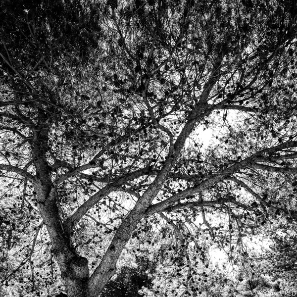 arbres-branches-007