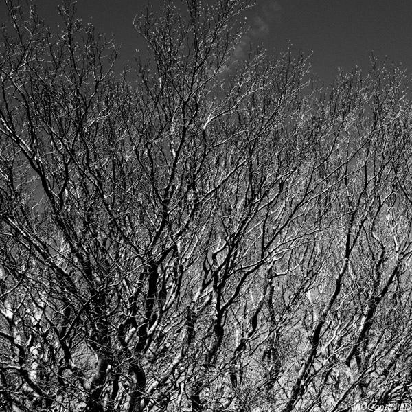 graphisme des branches d'arbre