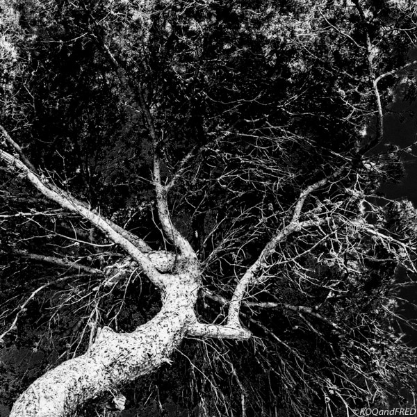 arbres-branches-012