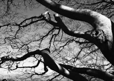 Branches d'arbres